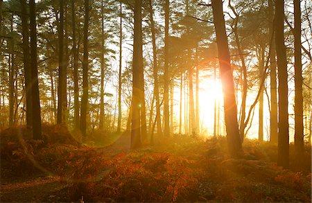 Sun shining through trees in woods Stock Photo - Premium Royalty-Free, Code: 635-06045617