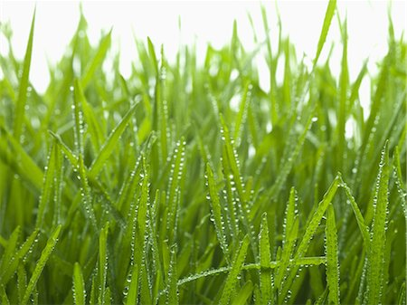 droplet - Close up of dew droplets on grass Stock Photo - Premium Royalty-Free, Code: 635-07364950
