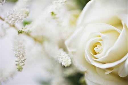 floral - Close up of white rose and white flowers Stock Photo - Premium Royalty-Free, Code: 635-03577606