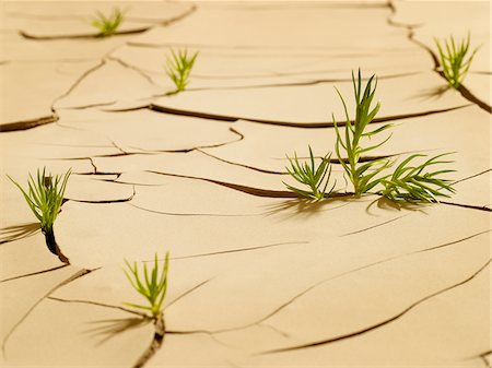 sprout - Grass sprouting through cracked mud Stock Photo - Premium Royalty-Free, Code: 635-03752784