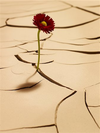 Flower blooming between cracks in mud Stock Photo - Premium Royalty-Free, Code: 635-03752782