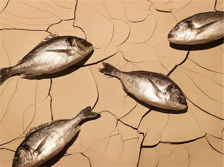 Dead fish laying on cracked mud Stock Photo - Premium Royalty-Free, Code: 635-03752783