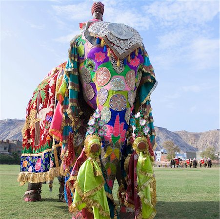 Low angle view of a mature man riding an elephant, Elephant Festival, Jaipur, Rajasthan, India Stock Photo - Premium Royalty-Free, Code: 630-01126990