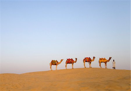 rajasthan camel - Four camels standing in a row with a man, Jaisalmer, Rajasthan, India Stock Photo - Premium Royalty-Free, Code: 630-03479124