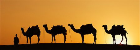 rajasthan camel - Silhouette of four camels standing in a row at sunset, Jaisalmer, Rajasthan, India Stock Photo - Premium Royalty-Free, Code: 630-03479134