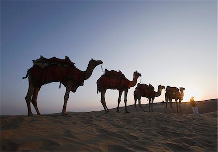 rajasthan camel - Low angle view of a person standing with four camels, Sam Desert, Jaisalmer, Rajasthan, India Stock Photo - Premium Royalty-Free, Code: 630-03479136