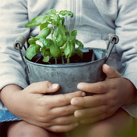 potted plant - Child holding basil plant, mid section Stock Photo - Premium Royalty-Free, Code: 632-05401299
