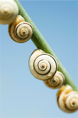 spiral - Snails on branch Stock Photo - Premium Royalty-Free, Code: 632-05604123