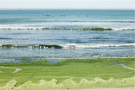 Toxic algae washed up on beach, Plage de Postolonnec, Crozon Peninsula, Finistère, Brittany, France Stock Photo - Premium Royalty-Free, Code: 632-05760541