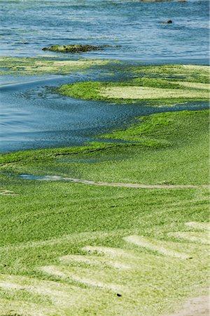 Toxic algae washed up on beach, Plage de Postolonnec, Crozon Peninsula, Finistère, Brittany, France Stock Photo - Premium Royalty-Free, Code: 632-05760623