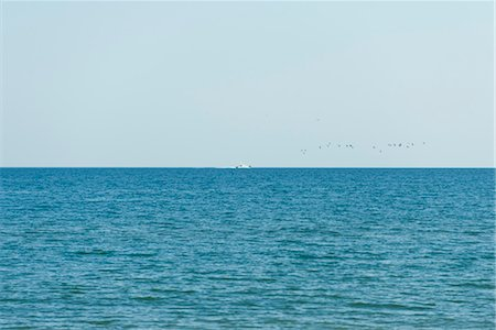 Seascape, boat and birds in visible in the distance Stock Photo - Premium Royalty-Free, Code: 632-05816909