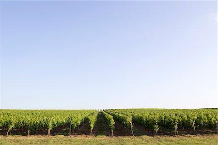 Vineyard, Bordeaux, France Stock Photo - Premium Royalty-Free, Code: 632-05991433