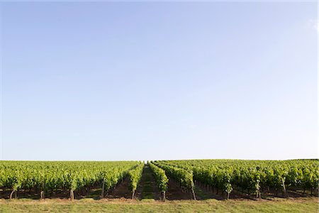 Vineyard, Bordeaux, France Stock Photo - Premium Royalty-Free, Code: 632-05991433