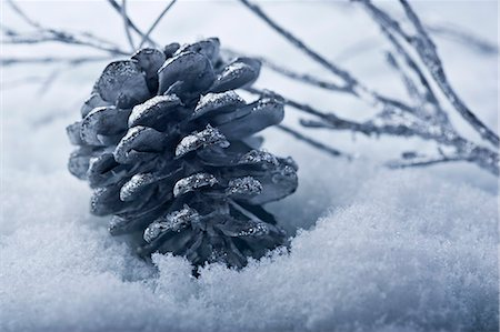 Pine cone Christmas ornament in snow Stock Photo - Premium Royalty-Free, Code: 632-06354111
