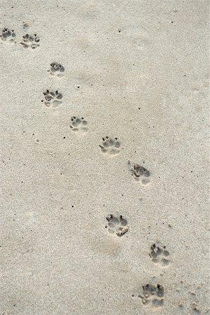 Paw prints on sand Stock Photo - Premium Royalty-Free, Code: 632-02745227