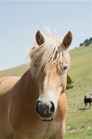 Horse in field Stock Photo - Premium Royalty-Free, Code: 633-06354662