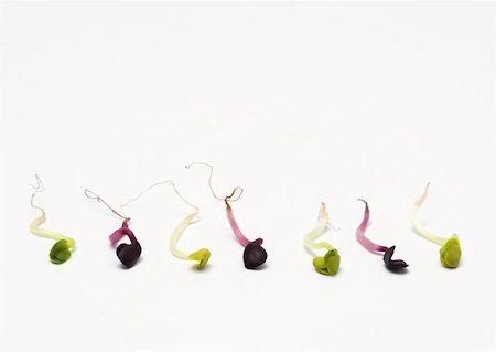 sperme - Fenugreek and radish sprouts Stock Photo - Premium Royalty-Free, Code: 633-01272701