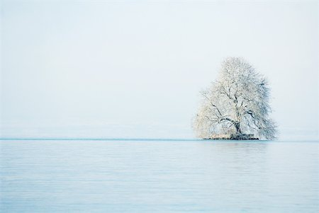 panoramic winter scene - Snow-covered tree in middle of lake Stock Photo - Premium Royalty-Free, Code: 633-01572931