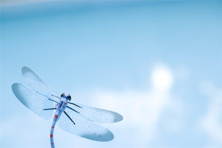 dragon fly - Dragonfly, close-up Stock Photo - Premium Royalty-Free, Code: 633-02065825