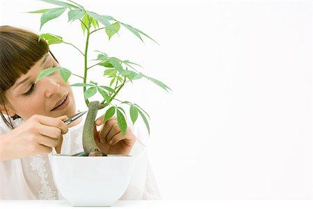 silk floss tree - Woman pruning potted silk floss tree Stock Photo - Premium Royalty-Free, Code: 633-02231756