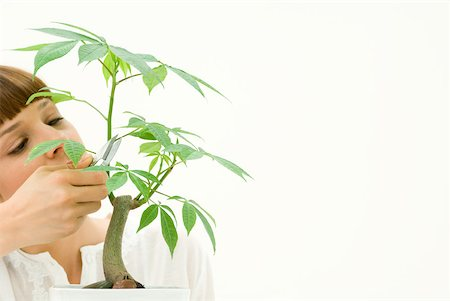 silk floss tree - Woman pruning potted plant Stock Photo - Premium Royalty-Free, Code: 633-02345900