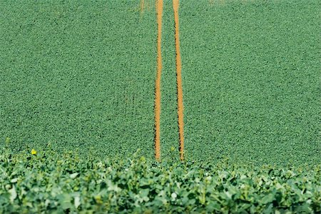Tire tracks in cultivated field, high angle view Stock Photo - Premium Royalty-Free, Code: 633-02645528
