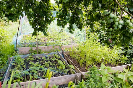 Netting protecting vegetables growing in garden Stock Photo - Premium Royalty-Free, Code: 633-03444856