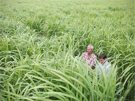 Farmers examining biomass fuel crop Stock Photo - Premium Royalty-Free, Code: 649-04828543