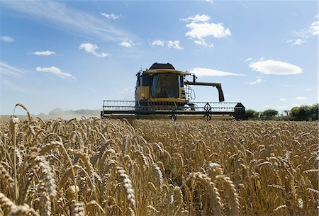 Thresher harvesting wheat Stock Photo - Premium Royalty-Free, Code: 649-05556006