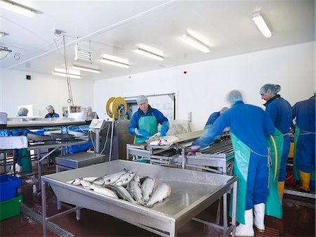 Workers in fish processing plant Stock Photo - Premium Royalty-Free, Code: 649-05649446
