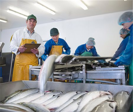 supervising - Workers in fish processing plant Stock Photo - Premium Royalty-Free, Code: 649-05649449