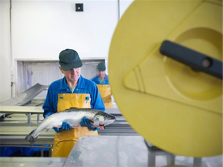 food processing plant - Worker in fish processing plant Stock Photo - Premium Royalty-Free, Code: 649-05649458