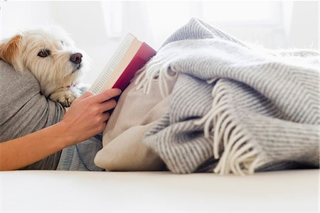 Woman reading in bed with dog Stock Photo - Premium Royalty-Free, Code: 649-05801033