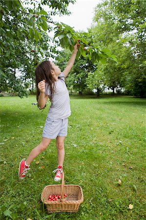 reaching - Girl picking fruit in backyard Stock Photo - Premium Royalty-Free, Code: 649-05801136