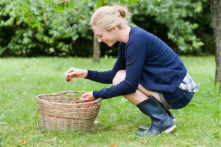 Woman picking cherries in orchard Stock Photo - Premium Royalty-Free, Code: 649-05819814
