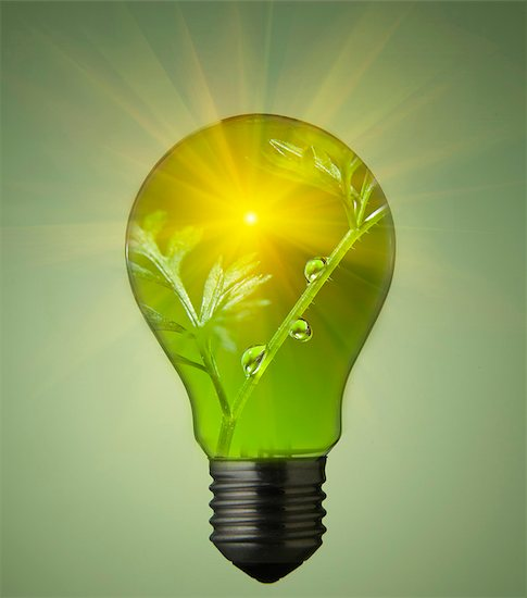 Plant growing in light bulb Stock Photo - Premium Royalty-Free, Image code: 649-05821658