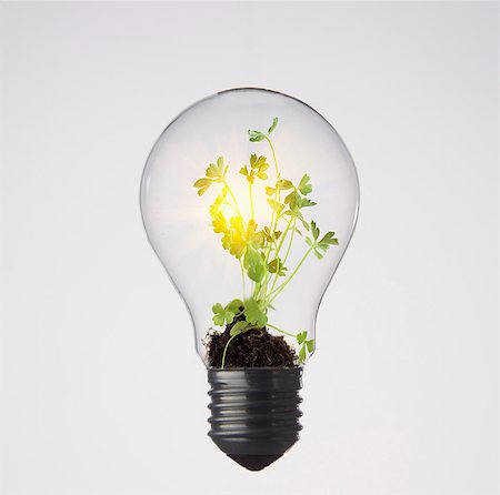 Plants growing in light bulb Foto de stock - Royalty Free Premium, Número: 649-05821650