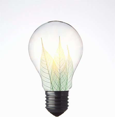 Leaves growing in light bulb Stock Photo - Premium Royalty-Free, Code: 649-05821651