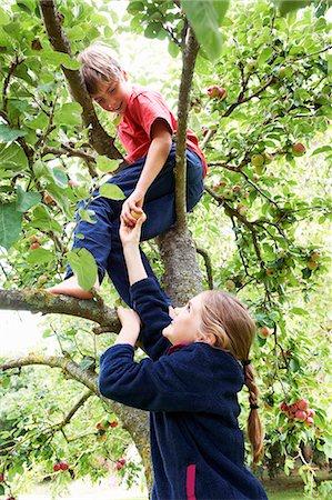 Children picking fruit in tree Stock Photo - Premium Royalty-Free, Code: 649-05949471