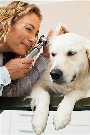 scope - Veterinarian examining dog in office Stock Photo - Premium Royalty-Free, Code: 649-06000977