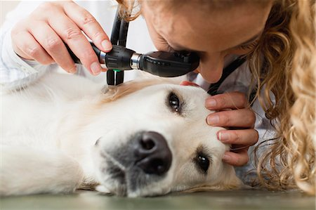 scope - Veterinarian examining dog in office Stock Photo - Premium Royalty-Free, Code: 649-06000981
