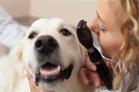 scope - Veterinarian examining dog in office Stock Photo - Premium Royalty-Free, Code: 649-06000982
