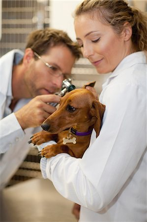 Veterinarians examining dog in kennel Stock Photo - Premium Royalty-Free, Code: 649-06000996