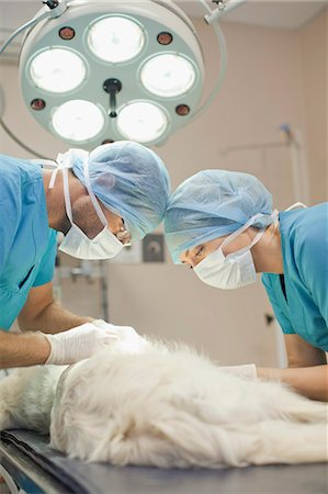 Veterinary surgeons working on dog Stock Photo - Premium Royalty-Free, Code: 649-06001001