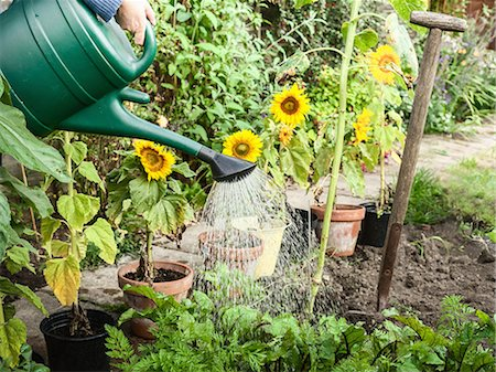 Hand watering plants in backyard Stock Photo - Premium Royalty-Free, Code: 649-06040079