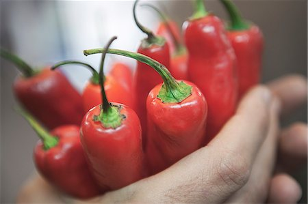 spicy - Close up of hands holding peppers Stock Photo - Premium Royalty-Free, Code: 649-06113193
