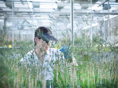 Scientist examining plants in greenhouse Stock Photo - Premium Royalty-Free, Code: 649-06113319