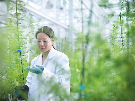 Scientist examining potted plants Stock Photo - Premium Royalty-Free, Code: 649-06113313