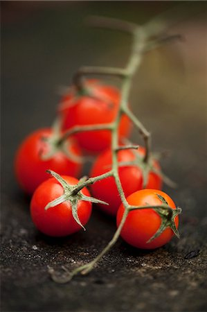 Close up of cherry tomatoes on vine Stock Photo - Premium Royalty-Free, Code: 649-06352886