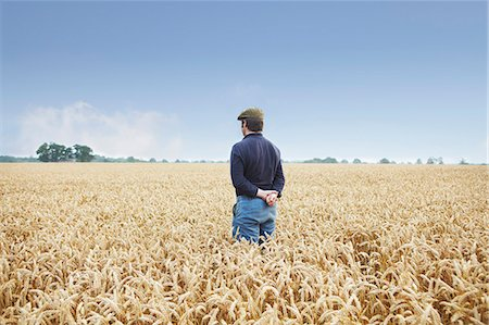 Farmer standing in field of wheat Stock Photo - Premium Royalty-Free, Code: 649-06353298